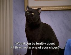 When you're on your way home from a night out with your friends   27 Times Salem The Cat Understood You
