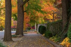 https://flic.kr/p/hcXXt5   Walk of Dreams (Explored)   This is just the view from a sidewalk in my home town of Quincy, Illinois.  Autumn has brought some beautiful color this year.   Thanks for stopping by and have a great weekend!  Facebook Page:  www.facebook.com/TigerImagery