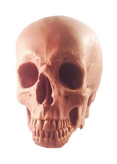 Spotted on the Harvey Nichols website - I Should Coco Milk Chocolate Skull - looks pretty realistic to me!  Shame it's £65 or I might've got one in for Halloween!