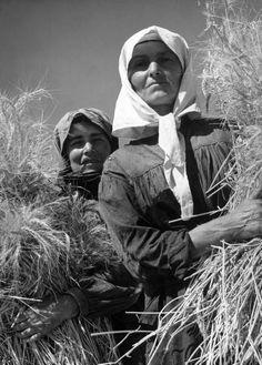 Margaret Bourke-White (New York, 14 giugno 1904 - Stamford, 27 agosto 1971): Ukrainian women wheat harvesters on a collective farm nr. Kharkov. August 1941