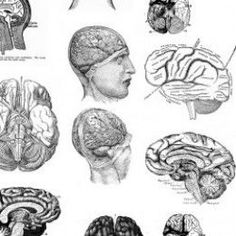 Free Brain Collage Sheet - As an art journaler, I am constantly on the lookout for good imagery for the self-discovery and soul-searching process of working in my art journal. I am drawn to images of brains and other anatomy diagrams; they are so...