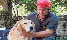 Romeo the miracle dog survives Italy quake
