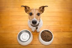 High-quality best canned dog foods you can offer him a wide variety of tastes & texturesFind the best Grain-Free Canned dog food for puppies & senior dogs. Best Cheap Dog Food, Dog Nutrition, Animal Nutrition, Nutrition Guide, Nutrition Education, Heimlich Maneuver For Dogs, Dog Feeding Schedule, Pets, Puppies