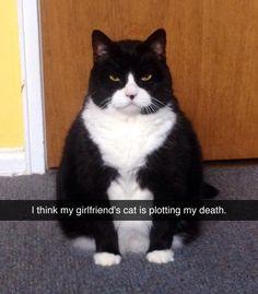 Murder Guy Cat Litter