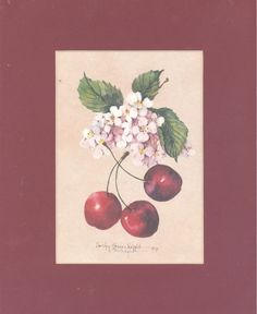 """Cherries with Blossoms 10"""" x 8"""" matted lithograph by CShoresInc on Etsy"""