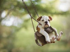 I will have an English Bulldog, and he will be called Bruce. mehollowell