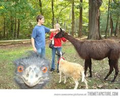 Greatest photobomb ever.... Bahahahahahahaha.... One of the many many reasons animals are my favorite part of life!