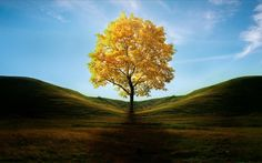 Stands the vast world of lonely trees photography wallpaper 5 Wallpapers