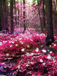 Espoo, Finland Magic forest: Pink