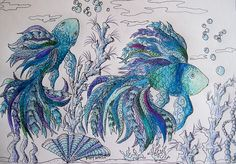 Colored Pencil and Ink fishies! Beautiful!