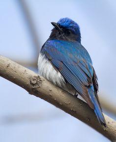 35PHOTO - Evgeny Slobodskoy - Синей птицы не стало меньше...