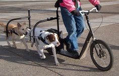 dog-powered-scooter2
