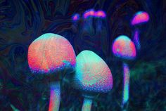 Find GIFs with the latest and newest hashtags! Search, discover and share your favorite Acid Art GIFs. The best GIFs are on GIPHY. Marc Chagall, Overlays, Acid Lsd, Trippy Mushrooms, Trippy Gif, Trippy Stuff, Psychedelic Drugs, Hippie Lifestyle, Mushroom Art