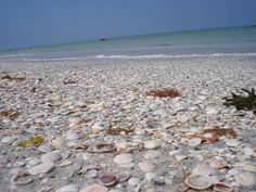 Indian Rocks Beach - Photos of Indian Rocks Beach in Florida Madeira Beach Florida, Indian Rocks Beach Florida, Florida Vacation, Florida Travel, Florida Beaches, Indian Shores Florida, Spring Break 2018, Shell Island, Rock Springs