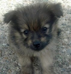 Zeke the Mixed Breed puppy - what a cutie!