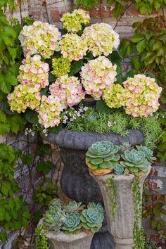 laissez les containers en pierre, souvent très lours, au pied des arbustes.... les succulentes feront la déco d'elles même.