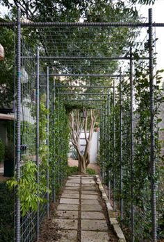 I like this easy to construct garden framework - rebar and coated fencing.  Great for vines, trees, tomatoes and beans, etc...