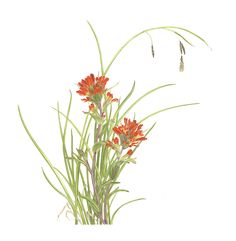 Botanical Drawings | And the Winners Are…..Biodiversity Conference Art Exhibit up through ...