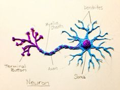 Check out this labelled neuron model done by twitter user @lousmer #3Doodler #WhatWillYouCreate