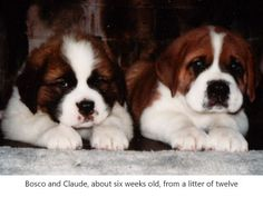 Roscoe and Claude at 6 months