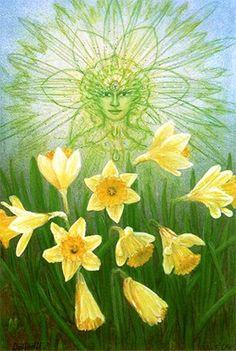 Påskelilje/Daffodil  Peter Fich Christiansen  fichart@webspeed.dk