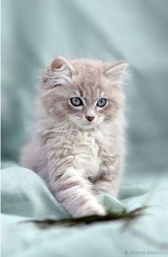 Did I mention I love cats? Lol. So precious!