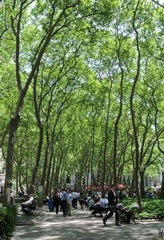 NYC Bryant Park which has one of the most beautiful canopy of trees in the entire metropolis.