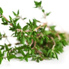 If you look in your #garden, there's an aromatic #herb with a powerfully protective ingredient for #bees. #Thyme contains thymol which helps fend off the pesky varroa mite (which is so harmful to bees) by confusing the mite and blocking its pores. So when #beekeepers use thyme essential oil in combination with a screened board, it causes the mites to, once confused, fall through and prevents them from climbing back into the hive!