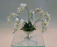 Garden of Miniatures: Phalaenopsis in weiss