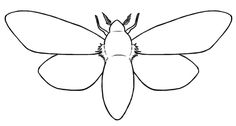 Moth outline; can customize it to my liking