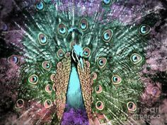 peacock art - Google Search