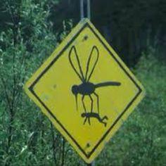 mosquito crossing. lol