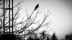 ITAP of a bird sitting on a twig outside my window - I call it 'The raven that refused to sing' as in a tribute to Steven Wilson. http://ift.tt/2kCK0nm