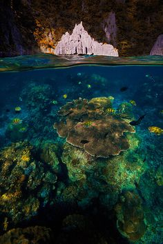 Underwater paradise. Late afternoon in Cadlao Lagoon, Palawan Island, Philippines.