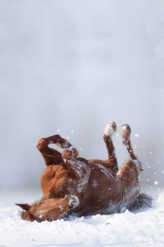 Horsin' Around - Winter Really Is A Wonderland For These Adorable Animals - Photos