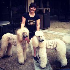 #LSU gameday poodles.