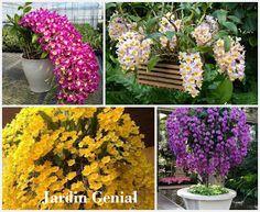 Дендро́биум (лат. Dendrobium) — это одна из самых прекрасных  орхидей, коротая может расти на открытом воздухе, придавая эффектности саду.  Длинные стебли густо покрыты  ароматными цветками, от  чисто-белой до темно-сиреневой, желтой и даже оранжевой  расцветки, бывают сорта с  трехцветной окраской лепестков.   В основном сорта имеют гибридное  происхождение, но фигурируют  чаще всего под названием Дендро́биум  благородный.   В теплое время года (когда ночные  температуры выше +7 С) можно…
