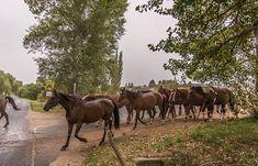 #hungary#travel #summer #ikozosseg #mik #instadaily #photooftheday #rural #nature #turista #magyarorszag #horses #animals #salfoldmajor