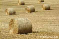 Google Image Result for http://www.freefoto.com/images/07/15/07_15_16---Round-Hay-Bales_web.jpg