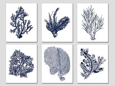 Navy+Blue+Coral+Navy+Blue+White+Coral+Print+by+BeachHouseGallery,+$38.00