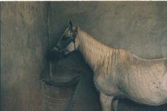 "Saatchi Online Artist: Ricardo Martinez; C-Type, 2011, Photography ""Equus 1 """