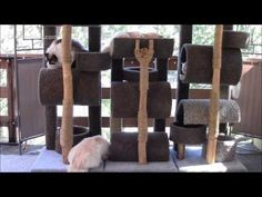 Great video on YouTube which gives you step by step guide to building a cat tree. DIY PetCare  How To Build a Six Foot Cat Tree for Your Cats. - YouTube