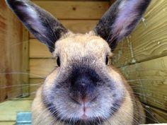 Mag ik je voorstellen aan ons konijnemeisje: koosnaam dieselie dorolie oftewel Diesel