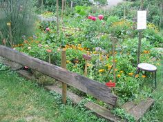 Here is the garden of the educational farm Bernwiller