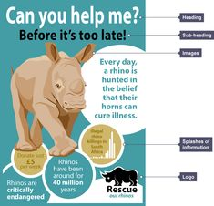 Charity leaflet for 'Rescue our rhinos' with the heading 'Can you help me?', the sub-heading 'Before it's too late', images of rhinos, splashes of information which give facts and a charity logo.