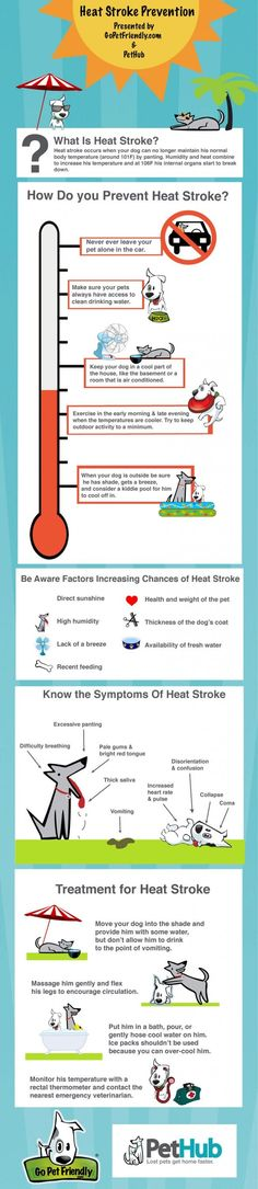 Infographic - Protecting Dogs From Heat Stroke Infographic - Heat Stroke in Dogs<br> High heat and humidity can be a deadly combination for dogs. This infographic provides advice so you can react quickly if your dog becomes overheated. Heat Stroke In Dogs, Dog In Heat, Animals Information, Pet Gear, Pet Travel, Baby Puppies, Dog Training Tips, Pet Health, Pets