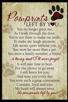 For Baby Niki.... Went to the Rainbow Bridge on September 5, 2013 I miss him each and every day....