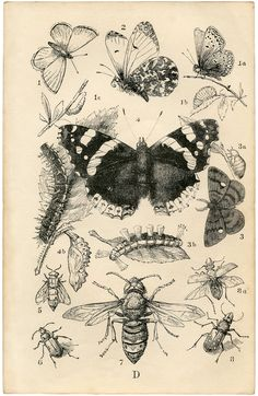 British Insects Print from Graphics Fairy