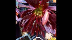 Flores  de vaso :)