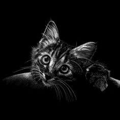 Black Paper - ititCreation